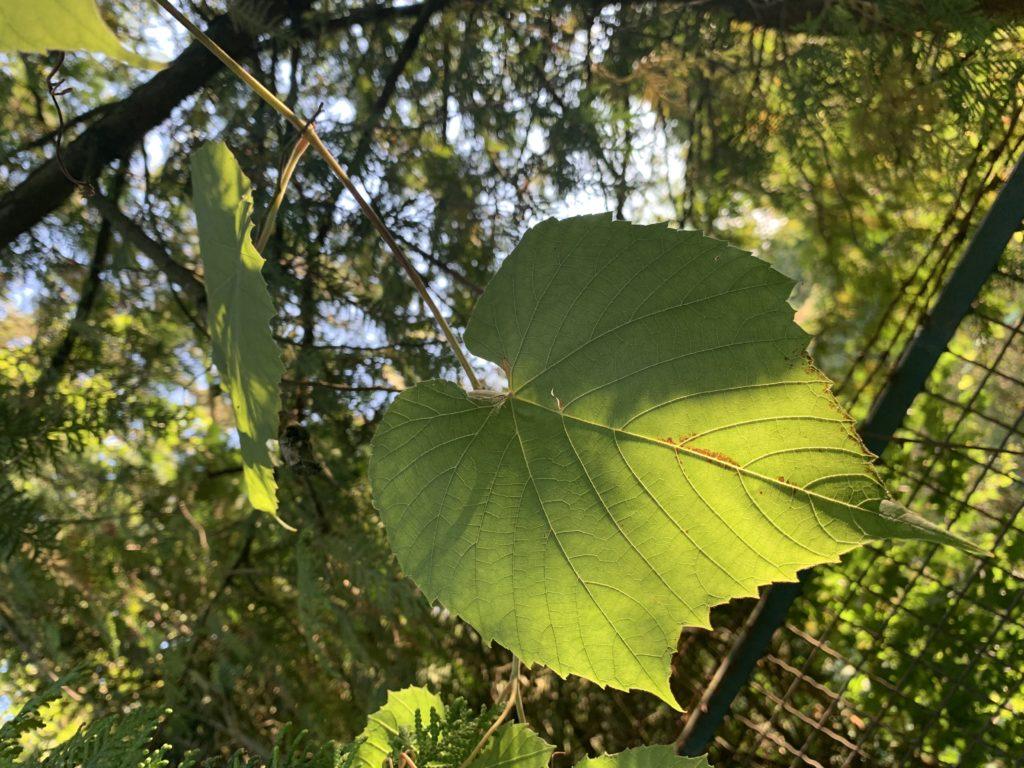 Ciao, Sommer – Gude, Herbst: Meine hessischen Highlights im September